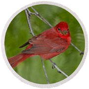 Summer Tanager Male Round Beach Towel