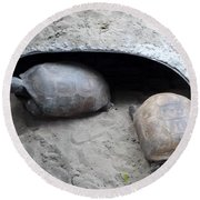 Sun Basking Turtles Round Beach Towel