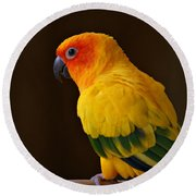 Sun Conure Parrot Round Beach Towel