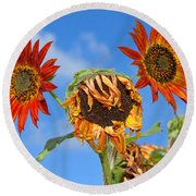 Sun Drenched In Autumn By Diana Sainz Round Beach Towel