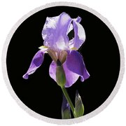 Sun-drenched Iris Round Beach Towel