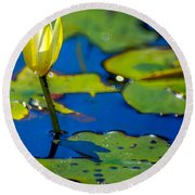Sun Drenched Lilly  Round Beach Towel
