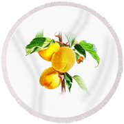 Sun Kissed Apricots Round Beach Towel