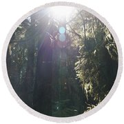 Sun Penetrates The Redwood Forest Round Beach Towel