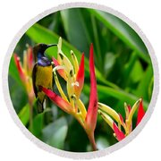 Sunbird On Heliconia Ginger Flowers Singapore Round Beach Towel