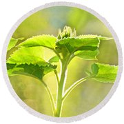 Sundrenched Sunflower - Digital Paint Round Beach Towel