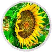 Sunflower Bloom Round Beach Towel