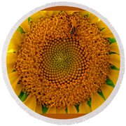 Sunflower Close-up Round Beach Towel
