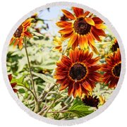 Sunflower Cluster Round Beach Towel