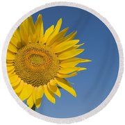 Sunflower, Helianthus Annuus Round Beach Towel