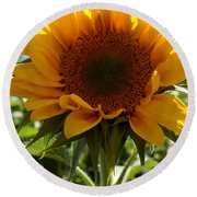 Sunflower Highlight Round Beach Towel