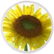 Sunflower In Light Round Beach Towel