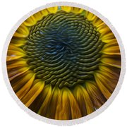 Sunflower In Rain Round Beach Towel