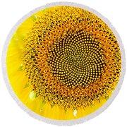 Sunflower In The Summer Sun Round Beach Towel