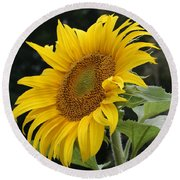 Sunflower Looking To The Sky Round Beach Towel