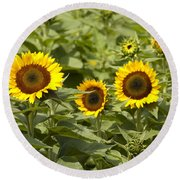 Sunflower Patch Round Beach Towel by Bill Cannon