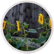 Sunflower Quartet Round Beach Towel
