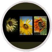 Sunflower Trio  Round Beach Towel