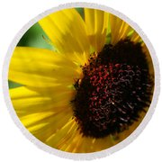 Sunflower Two Round Beach Towel