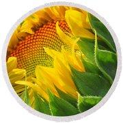 Sunflower Unfolding  Round Beach Towel