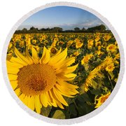 Sunflowers At Dawn Round Beach Towel