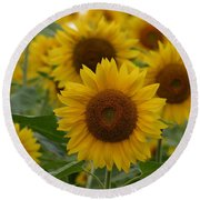 Sunflowers At The Farm Round Beach Towel