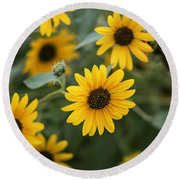 Sunflowers Bloom Round Beach Towel