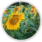 Sunflowers For Wishes Round Beach Towel
