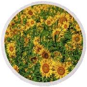 Sunflowers Helianthus Annuus Growing Round Beach Towel