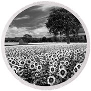 Sunflowers In Black And White Round Beach Towel
