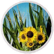Sunflowers In The Corn Field Round Beach Towel