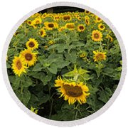 Sunflowers Panorama Round Beach Towel