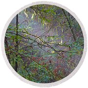 Sunlight Highlights In Armstrong Redwoods State Preserve Near Guerneville-ca Round Beach Towel
