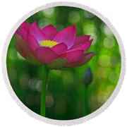 Sunlight On Lotus Flower Round Beach Towel