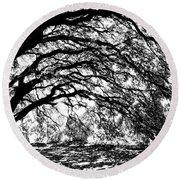 Sunlight Through Spanish Oak Tree - Black And White Round Beach Towel