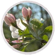 Sunlit Apple Blossoms Round Beach Towel
