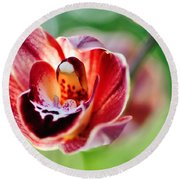 Sunlit Miniature Orchid Round Beach Towel by Kaye Menner