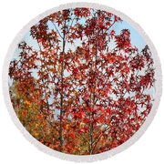 Sunlit Red In November 2012 Round Beach Towel