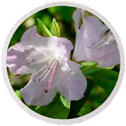 Sunlit Rhododendrons Round Beach Towel