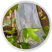 Sunlit Sycamore Leaves In Andreas Canyon In Indian Canyons-ca Round Beach Towel