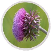 Sunlit Thistle Round Beach Towel