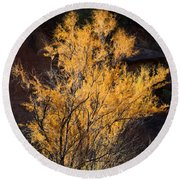 Sunlit Tree In Palo Duro Canyon 110213.06 Round Beach Towel