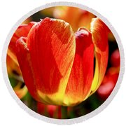 Sunlit Tulips Round Beach Towel by Rona Black
