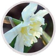 Sunlit White Daffodil Round Beach Towel