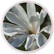 Sunlit White Magnolia Round Beach Towel