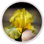 Sunlit Yellow Iris Round Beach Towel