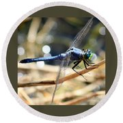 Sunning Blue Dragonfly Square Round Beach Towel