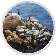 Sunning Seals Round Beach Towel