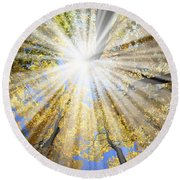 Sunrays In The Forest Round Beach Towel