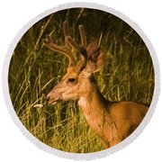 Sunset Buck Round Beach Towel